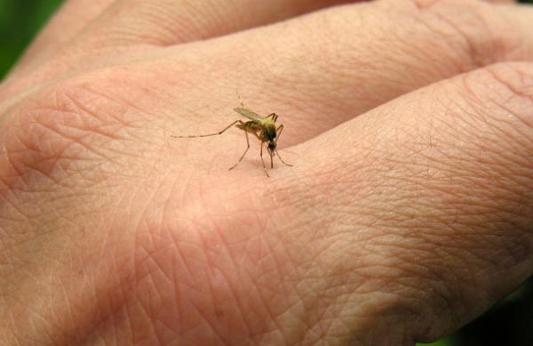 Veliko Gradište: obaveštenje o tretmanu suzbijanja komaraca 37773