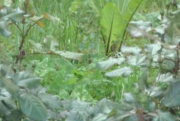 Veliko Gradište: Obaveštenje o suzbijanju krpelja i deratizaciji zelenih površina u gradu 35807