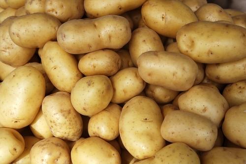 Svi stavljaju krompir u frižider, ali to je najveća greška! 10171