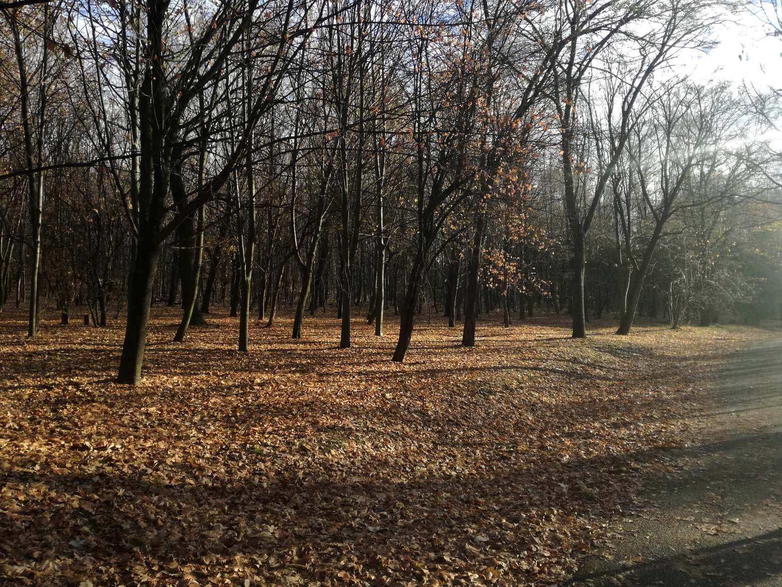 Čačalica i Ljubičevo u decembru(FOTO) 12308