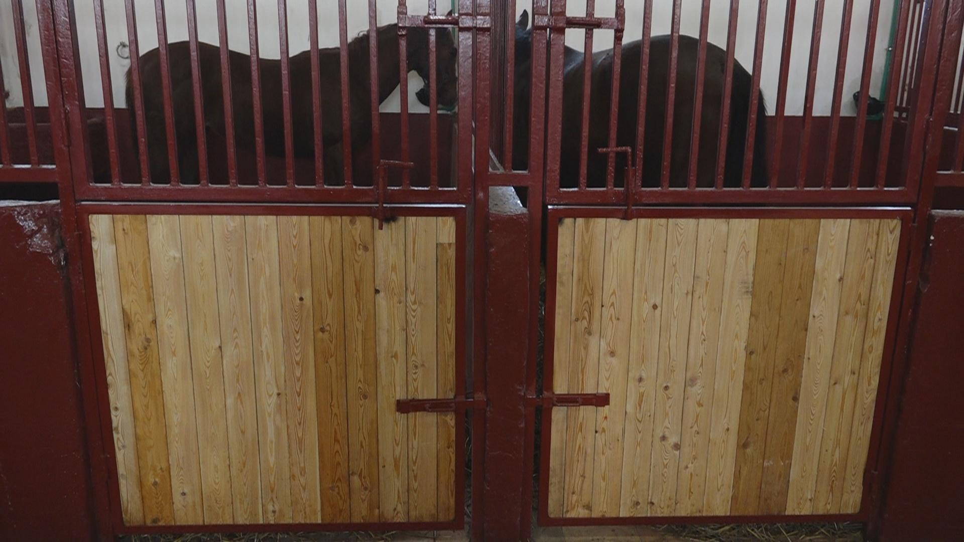"""U ergeli """"Ljubičevo"""" radovi pri kraju, konji useljeni u renovirane štale 12393"""