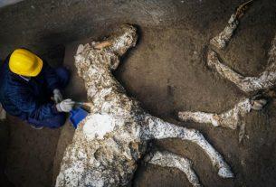 Pronađeni okamenjeni ostaci konja kod Pompeje FOTO 12988