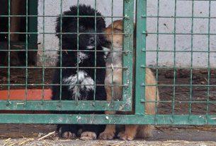 Azil za pse i mačke u zimskom periodu u Požarevcu FOTO VIDEO 14065