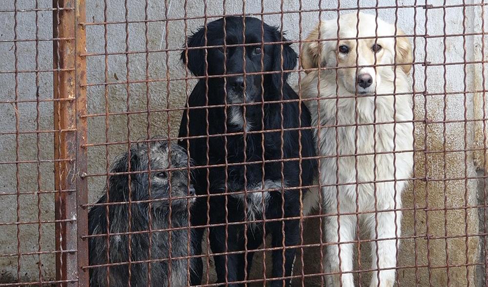 Azil za pse i mačke u zimskom periodu u Požarevcu FOTO VIDEO 3