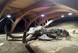 Mamut park - Viminacium, biće zatvoren za posetice zbog rekonstrukcije 13911
