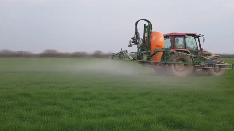 Za dobar prinos pšenice 14938