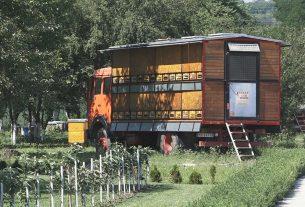 Pokrenuta kampanja za očuvanje pčela u Srbiji 15440