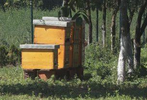 """IX.Međunarodno savetovanje pčelara Braničevskog okruga """"Više znaš,više vrediš"""" 29983"""