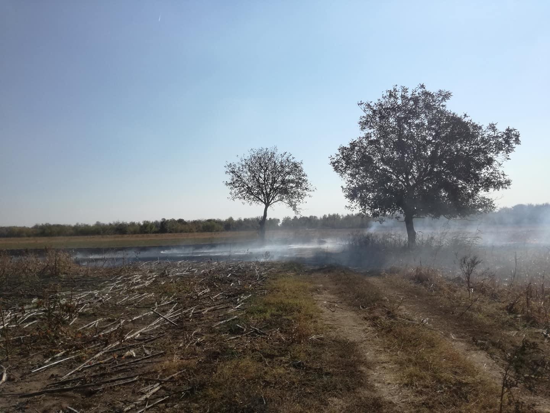 Odeljenje za vanredne situacije Požarevac: Zabranjeno paljenje strnih useva na otvorenom 16815