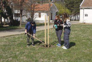 Uprava za šume besplatno poklanja sadnice građanima koji žele da sade drveće na svojim posedima 22371