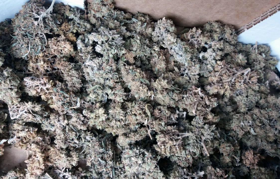 Zaplenjena marihuana 1.7kg, uhapšen osumnjičeni u okolini Velikog Gradišta 21726
