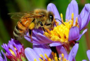 XXIX Dani MLAVSKO - HOMOLJSKIH pčelara u Kamenovu 31203