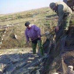 Ribarstvo u Srbiji u ozbiljnom problemu od uvođenja vanrednog stanja 34281