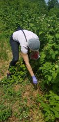 Primena dobre higijenske poljoprivredne prakse u vreme epidemije Korona virusa 35637