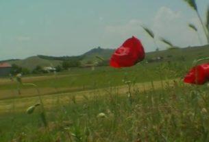 Pogledajte film o meštanima sela Drmno u najvećoj bici u Prvom balkanskom ratu 35122