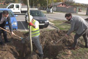Nastavlja se realizacija projekta formiranja novog drvoreda u Kostolcu 43428