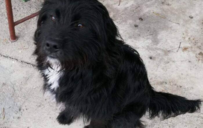Saopštenje Pokreta Jasno i glasno u vezi odluke o držanju domaćih životinja u Požarevcu 51217